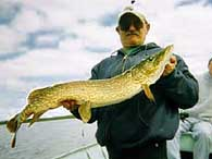 Beautiful Norther Pike Fish